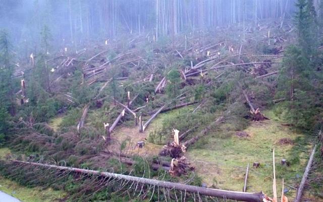 italy-fallen-tree